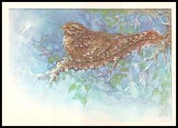 BIRDS. NIGHTJAR, Common Goatsucker. Artist A. Isakov. USSR, 1979. Unused Post Card - Oiseaux
