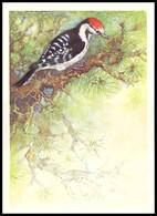 BIRDS. LESSER SPOTTED WOODPECKER. Artist A. Isakov. USSR, 1979. Unused Post Card - Oiseaux