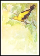 BIRDS. GOLDEN ORIOLE. Artist A. Isakov. USSR, 1979. Unused Post Card - Oiseaux