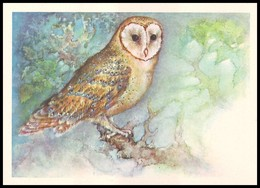 BIRDS. BARN OWL. Artist A. Isakov. USSR, 1979. Unused Postcard - Oiseaux