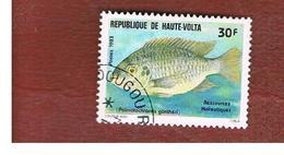 ALTO VOLTA  (UPPER VOLTA) - SG 671  -  1983  FISHES: GUNTHER' S KRIB           -  USED - Alto Volta (1958-1984)
