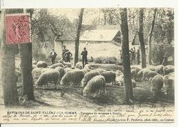 80 - ENV. SAINT VALERY SUR SOMME / TROUPEAU DE MOUTONS à PENDE - Saint Valery Sur Somme