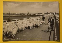 Cartolina Oristano Ponte Sul Tirso 1960 - Oristano