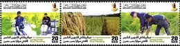 BRUNEI Culture Du Riz à Grande échelle 3v 2011-2012 Neuf ** MNH - Brunei (1984-...)