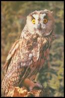 BIRDS. LONG-EARED OWL. USSR, 1985. Unused Postcard - Birds