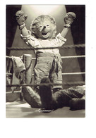 Cpsm HÉRISSON - MECKI - Boxe Boxeur Ring - ANIMAUX Humanisés - Mecki