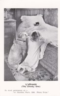 AM42 Young Girl Praying With Dog And Cat - Reproduction Postcard - Children And Family Groups