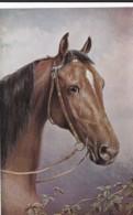 AS74 Animals - Horses - Brown Horse's Head - Artist Signed CR, Tuck Oilette - Cavalli