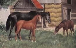 AS74 Animals - Horses - 3 Horses In A Farmyard - Chevaux