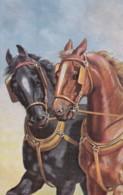 AS74 Animals - Horses - 2 Work Horses - Chevaux