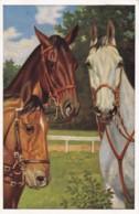 AS74 Animals - Horses - 3 Horses, 2 Brown 1 White - Pferde
