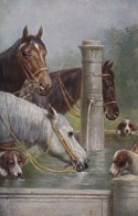 AS74 Animals - Horses - Horses And Dogs Drinking By A Trough, Artist Signed C. R - Chevaux