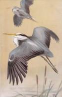 AS74 Animals - Birds - Heron, Artist Signed R.G - Birds