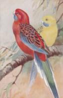 AS74 Animals - Birds - Pennant's Parrakeet, Artist Signed RG - Birds