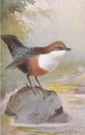 AS74 Animals - Birds - Dipper, Artist Signed Roland Green - Oiseaux
