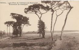 CARTE POSTALE ORIGINALE ANCIENNE : PAIMPOL ENVIRONS LES PINS DE L'ABBAYE DE BEAUPORT COTES D'ARMOR  (22) - Paimpol