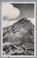 ZA.- SOUTH AFRICA. CAPE TOWN. Lower And Upper Cableway Stations.Table Mountain Aerial Cableway. 1950 - Zuid-Afrika