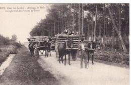 Dans Les Landes - Attelages De Mules Transportant Des Poteaux De Mines - Attelages