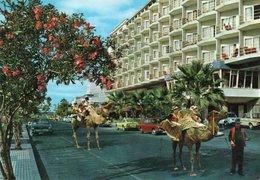 PUERTO DE LA CRUZ-TENERIFE- VIAGGIATA    FG - Tenerife