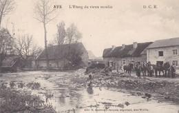 619 Ave L Etang Du Vieux Moulin - Belgium