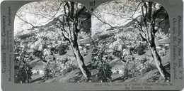 Switzerland WENGEN Bird's Eye View Bernese Alps Stereoview 10713 607x NEAR MINT - Fotos Estereoscópicas
