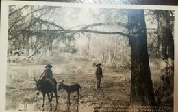 O) MEXICO, OLD POSTAL CARD. LANDSCAPE - CHAPULTEPEC- ROAD TO CADEREYTA, XF - Messico