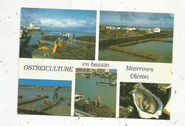 Cp , Métier ,pêche , OSTREICULTURE ,  Multi Vues , 17 , MARENNES OLERON , Voyagée - Pesca