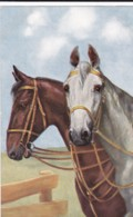 AS75 Animals - Horses - Brown And White Horse - Chevaux