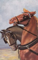 AS75 Animals - Horses - 2 Horses - Chevaux