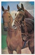 AS75 Animals - Horses - 3 Horses - Pferde