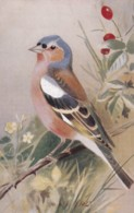 AS75 Birds - Chaffinch By Roland Green - Illustrators & Photographers