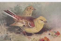 AS75 Birds - Yellowhammer By Roland Green - Illustrators & Photographers