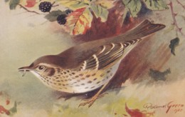 AS75 Birds - Song Thrush By Roland Green - Illustrators & Photographers
