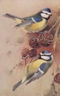 AS75 Birds - Blue Tit By Roland Green - Illustrators & Photographers