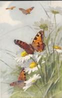 AS75 C. Klein - Butterflies And Daisies - Klein, Catharina