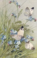 AS75 C. Klein - Butterflies And Forget Me Nots - Klein, Catharina