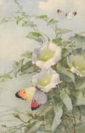 AS75 C. Klein - Butterflies And Bindweed - Klein, Catharina