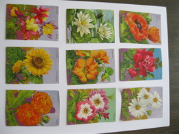 Chromo's Oude Schoolprenten Bloemen - Flowers