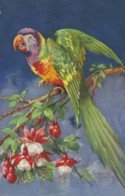 AS75 Birds - Parrot By Carlo - Illustrators & Photographers