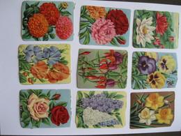 Chromo's Oude Schoolprenten Bloemen (reliëf) - Flowers