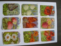Chromo's Oude Schoolprenten Bloemen (reliëf) - Fleurs