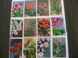Chromo's Oude Schoolprenten  Bloemen   Pokon - Flowers