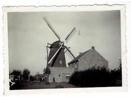 BREE - Kleine Foto 8,5 X 6,2 Cm - Molen Buys - Afgebroken 1950 - Bree
