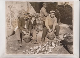 LEMON AND ORANGE PEEL FOR MARMALADE SICILY ITALY ISLAND   +- 25*20CM  Fonds Victor FORBIN (1864-1947) - Profesiones
