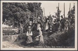 AK - Müllheim In Baden, Beim Herbsten Am Luginsland, Fotokarte. - Muellheim