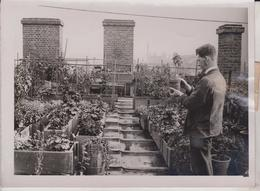SOUTHWARK TOWN HALL  ROOF GARDEN   +- 21*15CM  Fonds Victor FORBIN (1864-1947) - Fotos