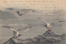 Sea Gulls , 1903 - Birds