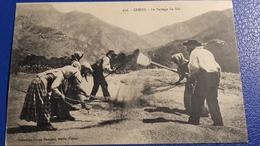 Rare Carte Postale : CORSE - Le Battage De Blè ; Collection Simon Damiani , Bastia - France