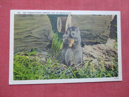 The Pennsylvania Hog Or Woodchuck        Ref 3532 - Animals