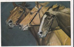 AS76 Animals - Horses - 3 Brown Horses - Caballos